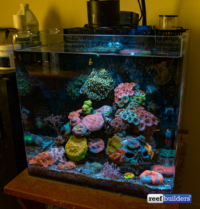 lps-coral-paradise-11