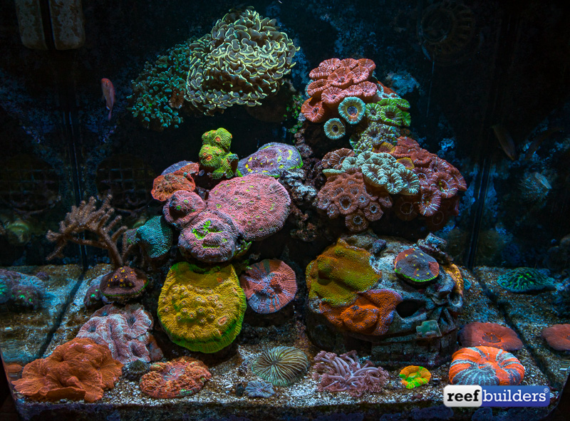 lps-coral-paradise-2