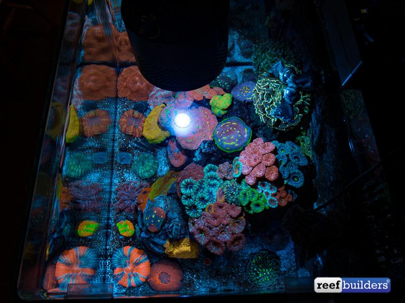 lps-coral-paradise-7