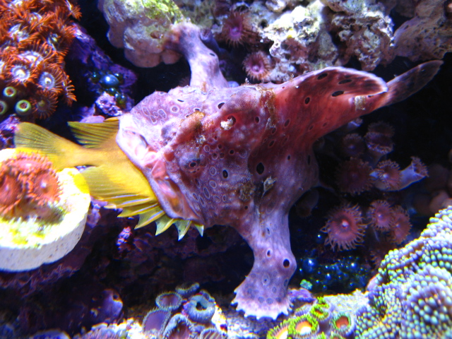 This one was quick enough to capture a rabbitfish.