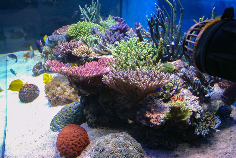 Even when looked at from the side the corals are impressive
