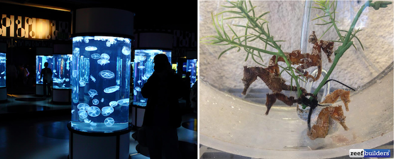 jellyfish-seahorses