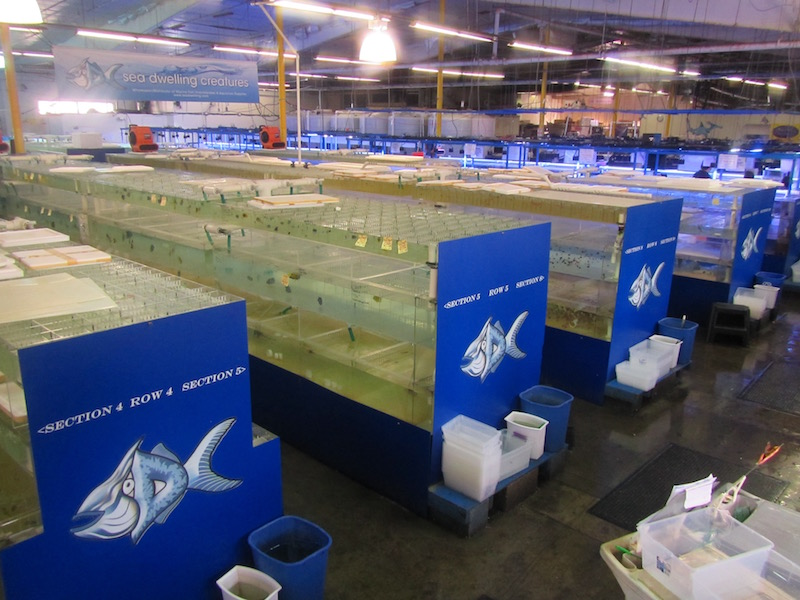The fish holding facility at a wholesalers that is state of the art