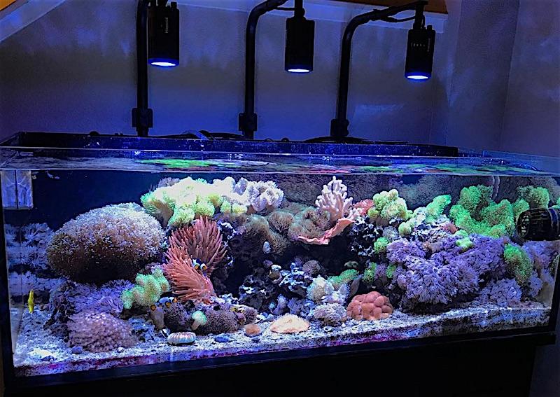 skimmerless-reef-tank