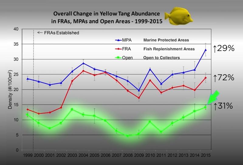 yellow-tang-population-statistics