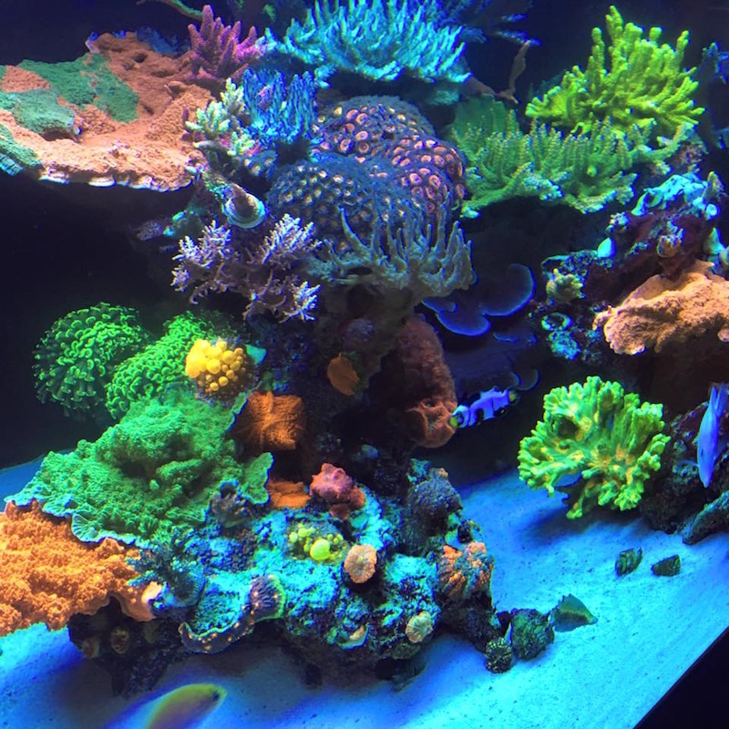 The front tank at WWC which in my opinion is as impressive as many of the reefs I have seen