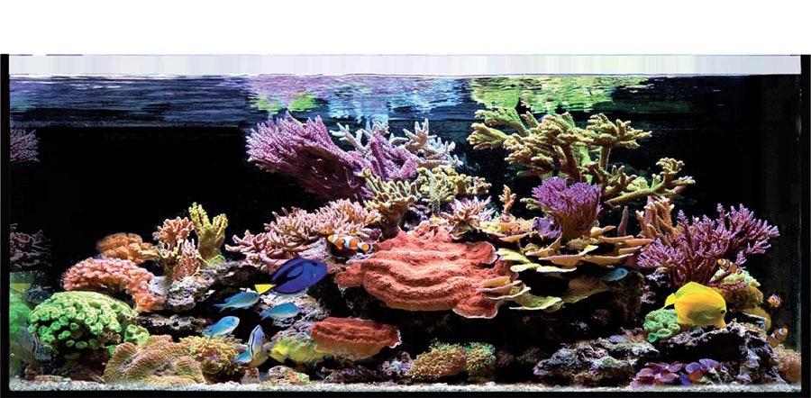An example of an Elos reef tank