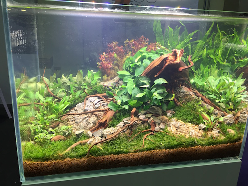 An Elos planted freshwater tank