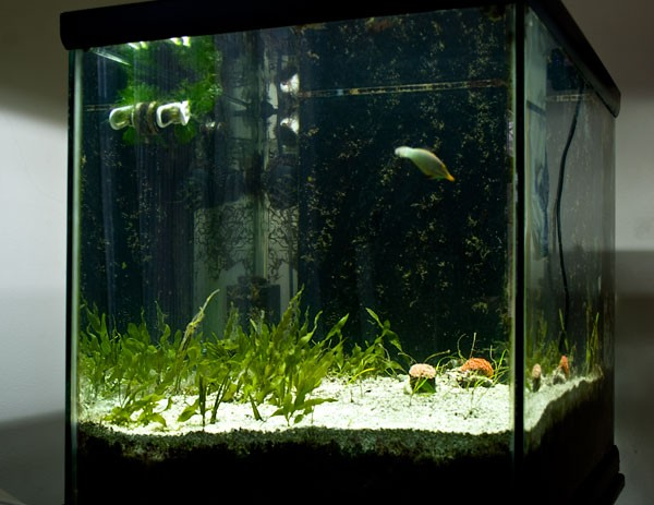 Mike Cao's refugium on his 65 gallon NPS tank.