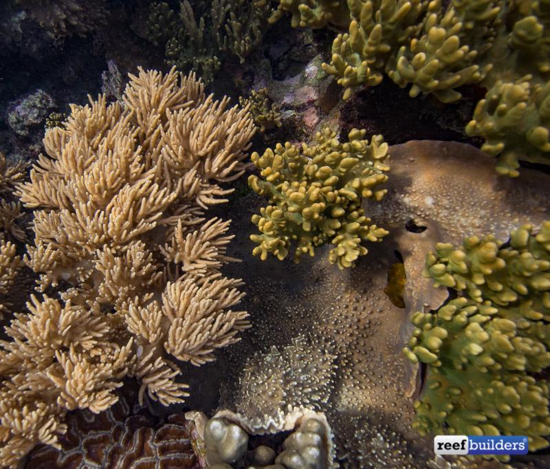 leather-corals-raja-ampat-3