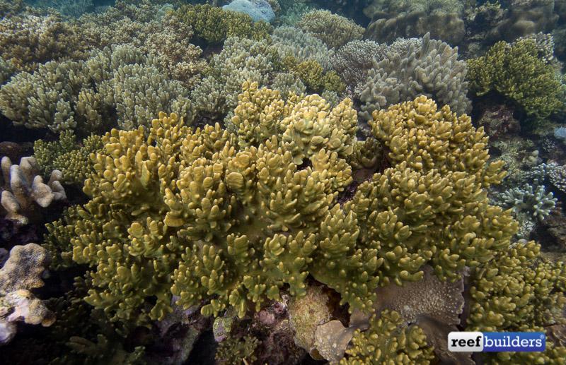 leather-corals-raja-ampat-4