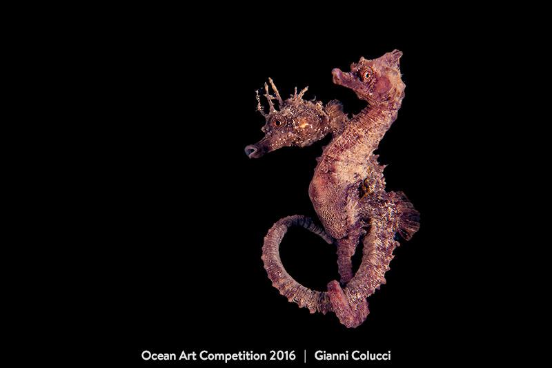 4th-behavior-oa16-gianni-colucci-800px