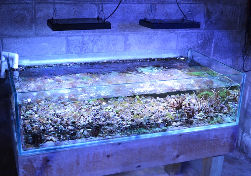 Growing frags in a basement or garage is one way to get started in the business