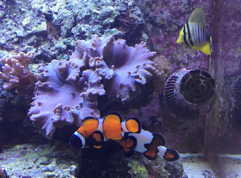 When you have a shop of your own you may get lucky and come across something unique like this clownfish