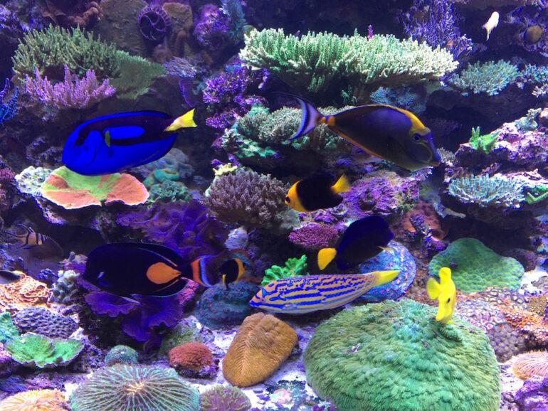 The High Cost Of The Reef Aquarium Hobby Reef Builders The Reef And Saltwater Aquarium Blog