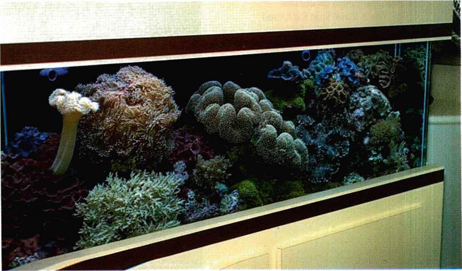 burleson-reef-tank.jpg