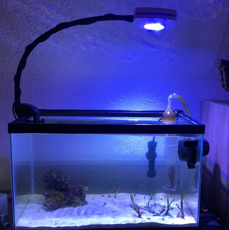 caribbean-reef-tank-set-up