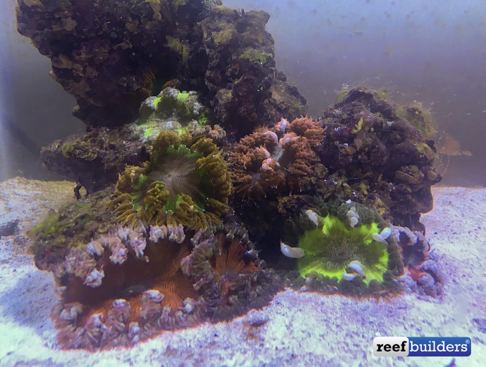 flower-anemone-7