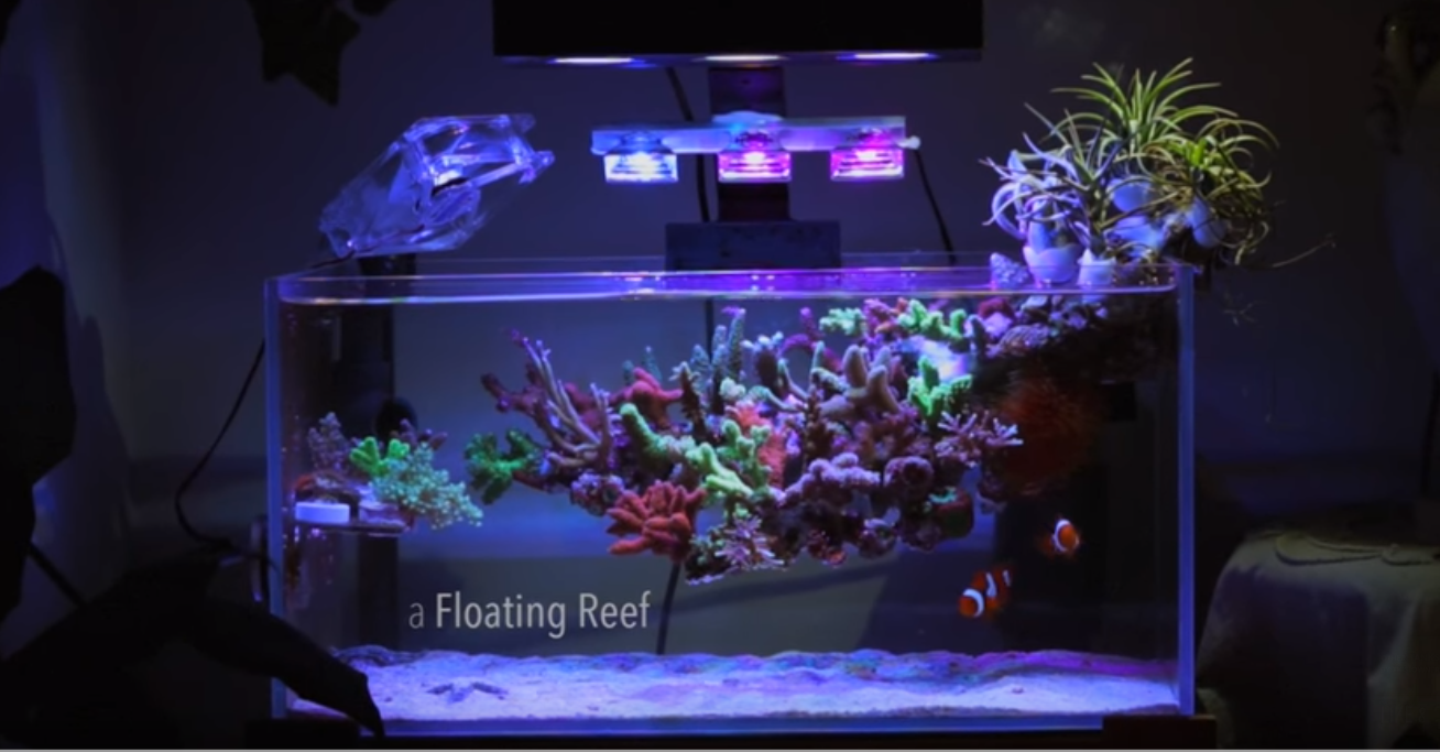 Amazing Floating Nano Reef Video Reef Builders The Reef And Saltwater Aquarium Blog