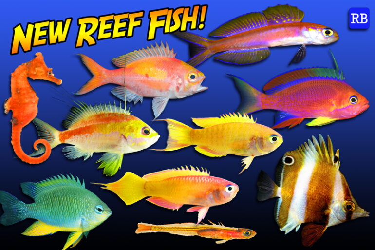 Top Ten New Species Of Reef Fish