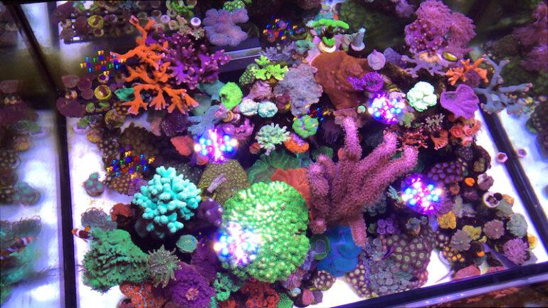 Spy S Simple Very Effective Reef Tank Video Reef Builders The Reef And Saltwater Aquarium Blog