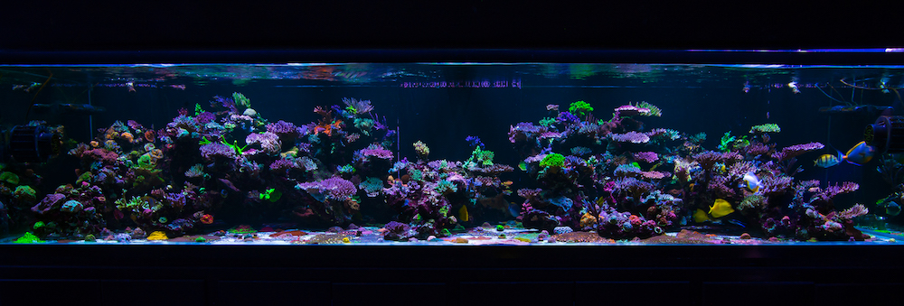 the world wide corals 900 gallon show tank 3 years later featured