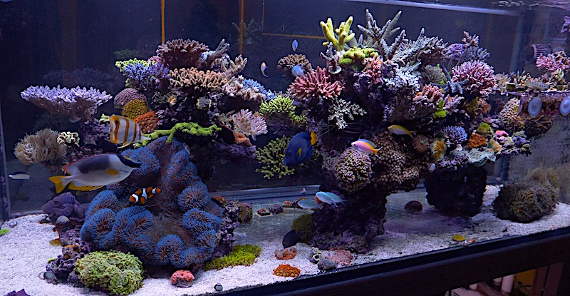 The Glorious Lifted Reef Of Evan Luo Video Reef Builders The Reef And Saltwater Aquarium Blog