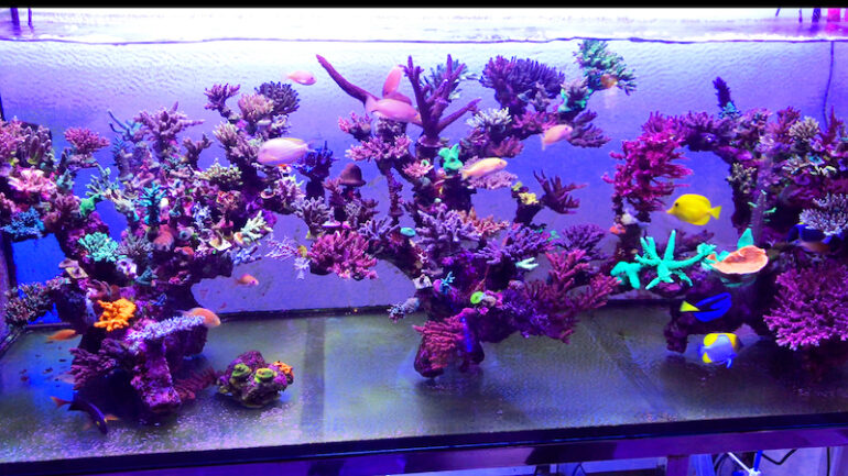 There S A Very Original Aquascape At Vp Corals In Taipei Taiwan Reef Builders The Reef And Saltwater Aquarium Blog