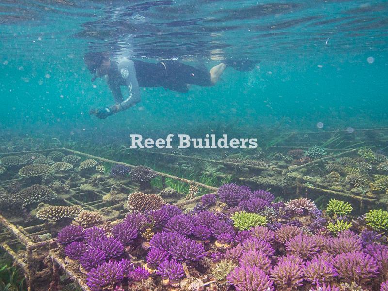 Snorkeling Coral Farm