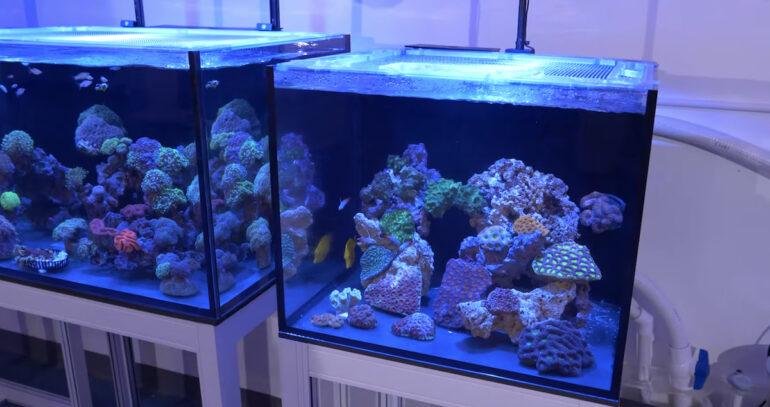 40 Gallon Lps Reef Tank Installed At The Reef Builders Studio Reef Builders The Reef And Saltwater Aquarium Blog