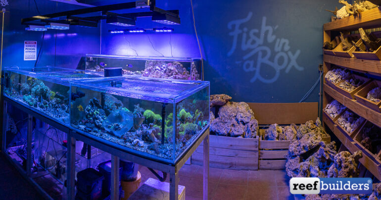 Fish in a Box is Your Stop for Coral Frags in Brasília | Reef Builders | The Reef and Saltwater Aquarium Blog