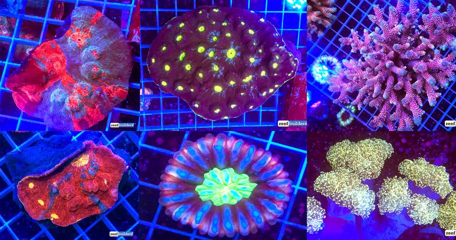 Unique-Corals-Solomon-Islands.jpg