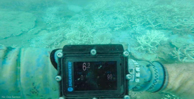 Coral-Bleaching-GBR-1-770x395.jpg