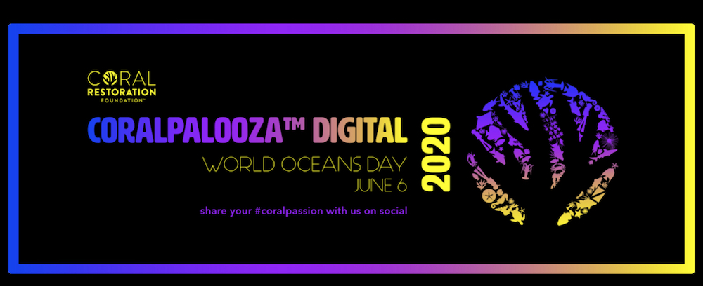 CORALPALOOZA Goes Digital With Their First Online Event. | Reef Builders | The Reef and Saltwater Aquarium Blog