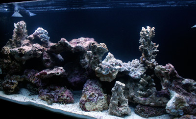 Avoid These 5 Live Rock Aquascaping Pitfalls | Reef ...