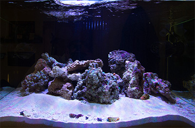 What S Your Aquascaping Rock Of Choice Reef Builders The Reef And Saltwater Aquarium Blog