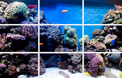 Marine Aquarium Aquascaping The Rule Of Thirds Reef Builders The Reef And Saltwater Aquarium Blog