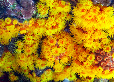 sun-coral1.jpg