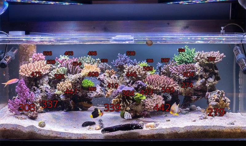 Reef Trigger Built An Impressive Modern Japanese Style Reef Aquarium Reef Builders The Reef And Saltwater Aquarium Blog