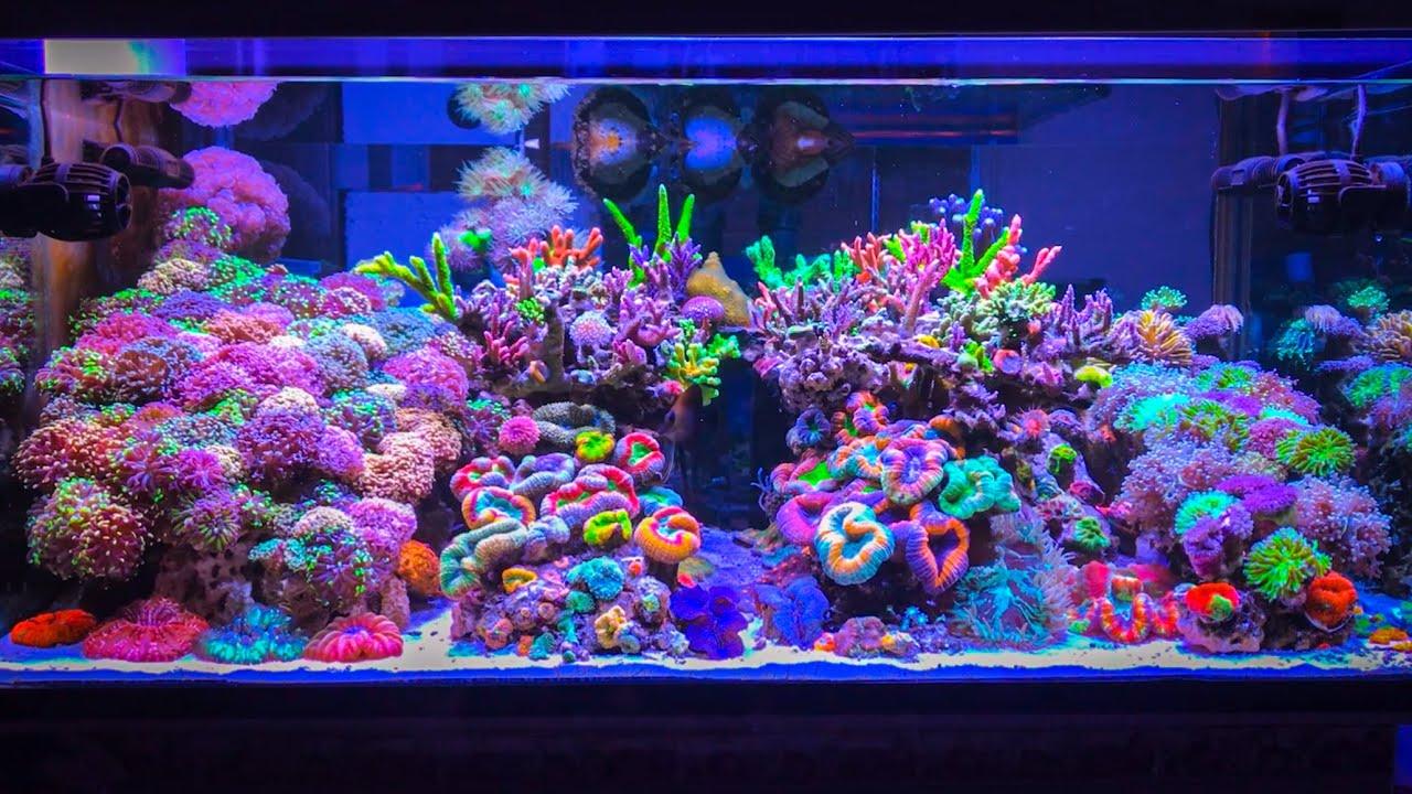 instagram-reef-tank.jpeg