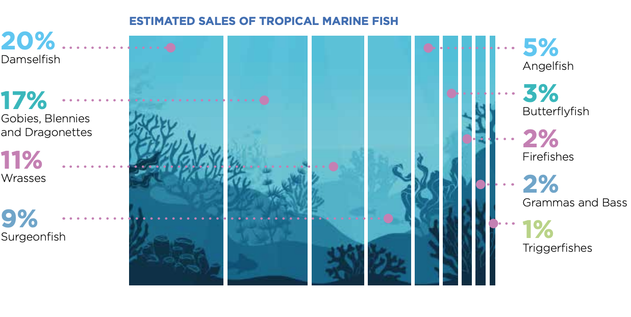 OATA estimated sales of tropical marine fish infographic