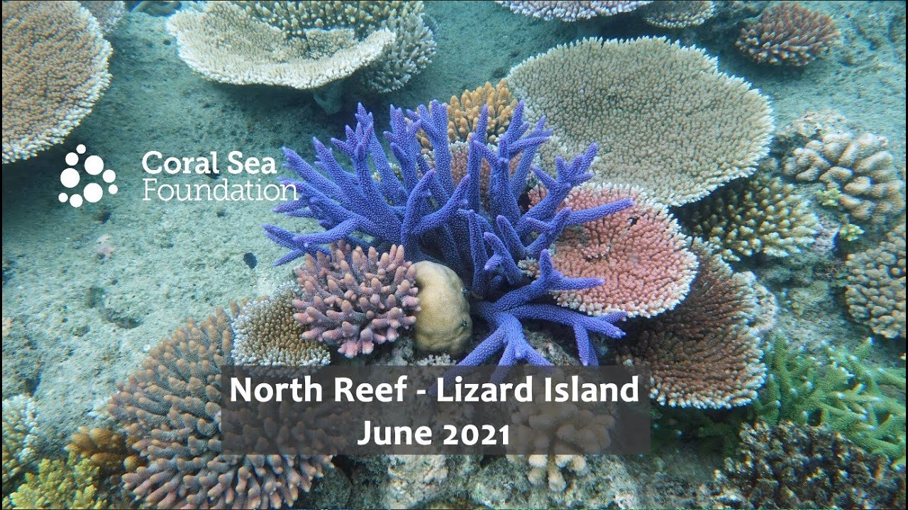 We Can Only Dream of a Reef Tank Looking Like the Corals of Lizard Island | Reef Builders | The Reef and Saltwater Aquarium Blog