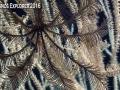 Okeanos-Coral-17