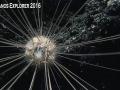 Okeanos-Sea-Urchin-2