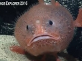 Okeanos-sea-toad