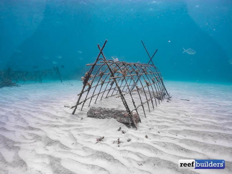 Punta-Cana-Acropora-3
