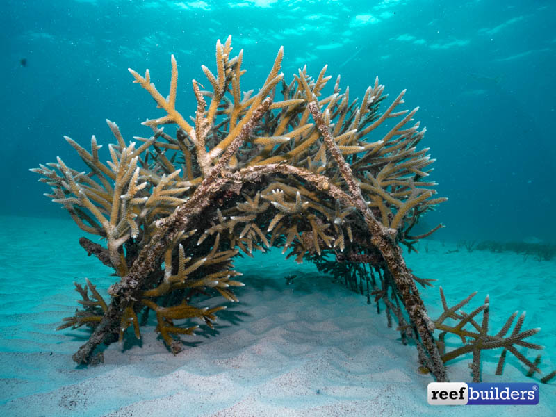 Punta-Cana-Coral-1