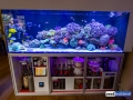 dutch-reef-tank-Wesley Vreeswijk-12