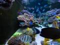 dutch-reef-tank-Wesley Vreeswijk-2