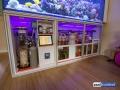 dutch-reef-tank-Wesley Vreeswijk-6